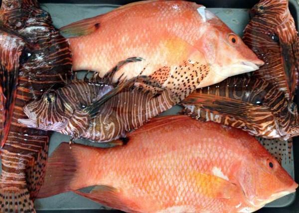 lionfish-slayer-productivity